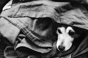 Copy of homeless_dog_
