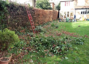 Valentine's Day 2016 and it's all about a hedge