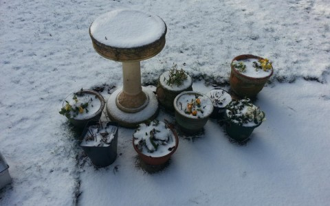 floral arrangement in the snow