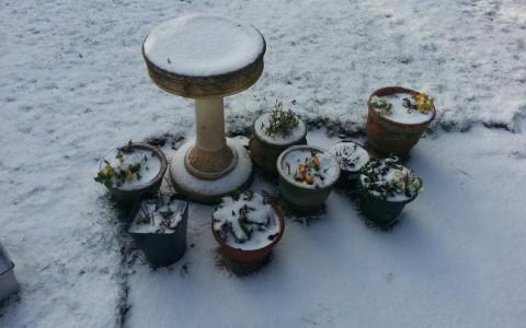 floral arrangement in the snow